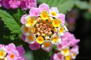 rhino_tower_flower