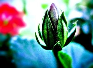 rhino_tower_flower2