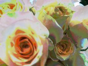 photoshoped rose